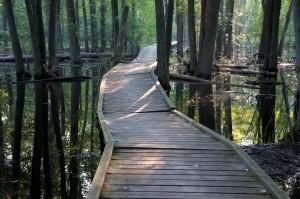 3-ArboretumSwampwalk_byKimLawrence